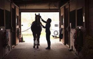 źródło: horse-about.com